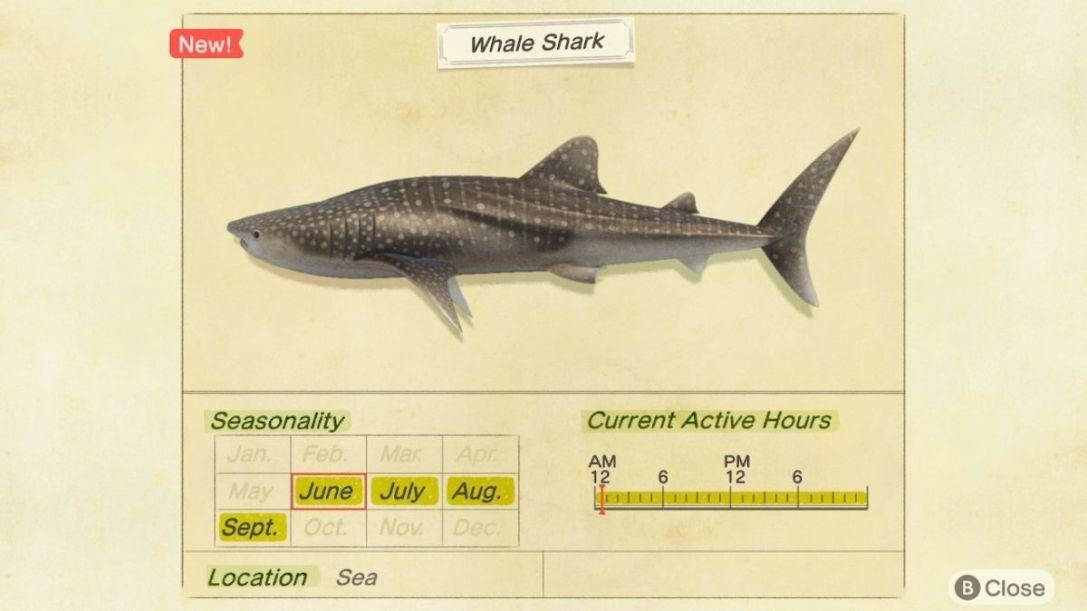 Whale Shark New Horizons