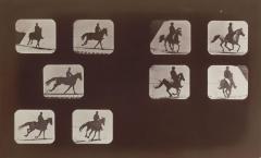 Eadweard J. Muybridge - Studies of Foreshortenings