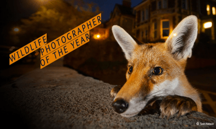 Natural Wonder: Wildlife Photographer of the Year at The Natural History Museum
