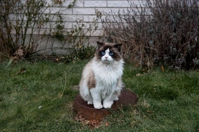A Man Called Ove - Cute Cat