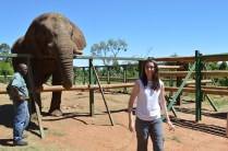 After feeding the elephant