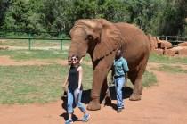 Tori walking the elephant
