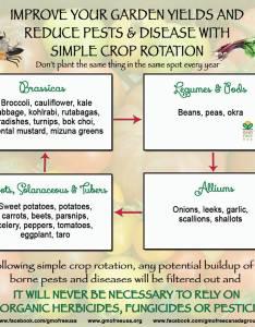 Crop rotation chart  an easy to understand schematic also resources culverhouse community garden rh culverhousegarden