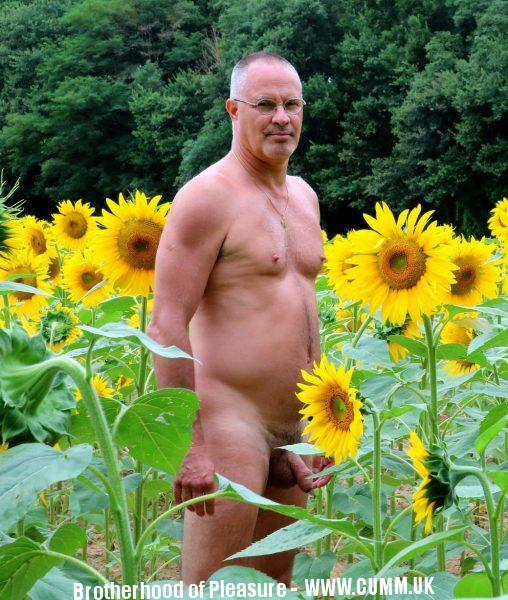 sunflower cock