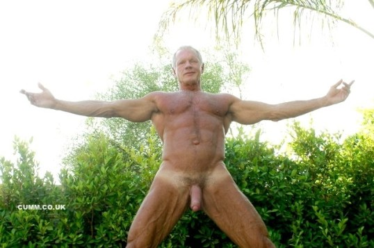 mature silver muscle bear
