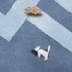 Mèo tìm thức ăn