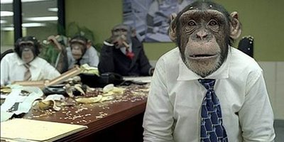 monkey_office_1a (1)