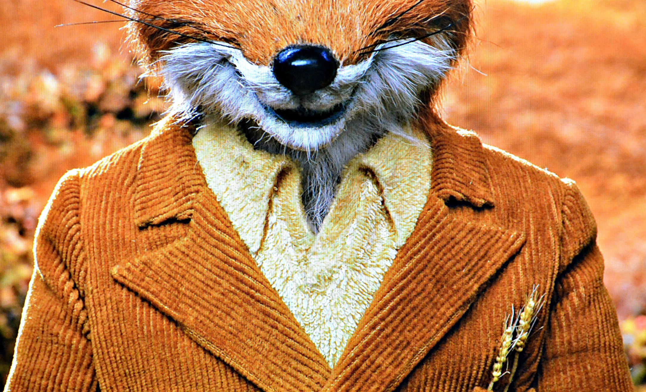 Study Fashion In Wes Anderson S Fantastic Mr Fox Cup