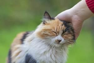 pisicile ne imbunatatesc sanatatea