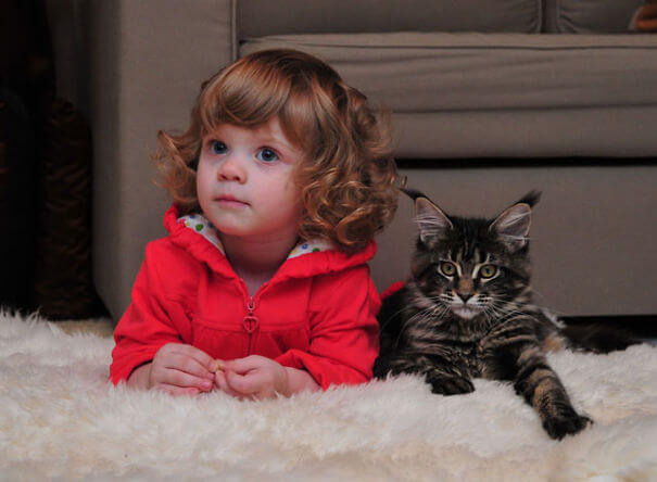 pisicile sunt potrivite pentru copii