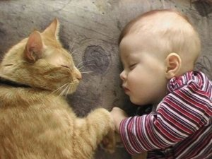faci cunostinta unei pisici cu un bebelus