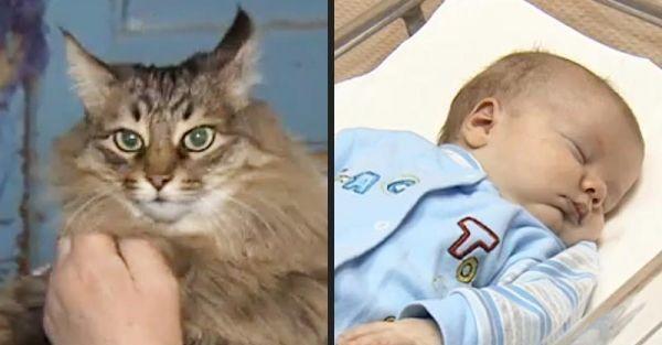 Masha, pisicuta care a salvat de la inghet un bebelus abandonat