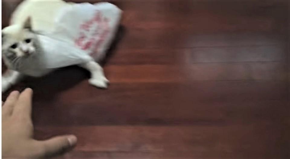 Pisicuta care s-a aseazat intr-o punga si a regretat