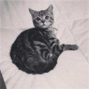 matilda, pisica cu ochi de extarterestru