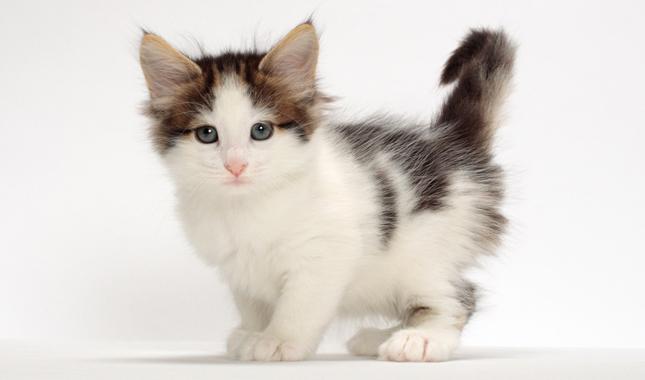 informatii despre pisici