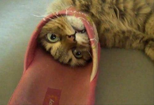 pisici_haioase_blocate