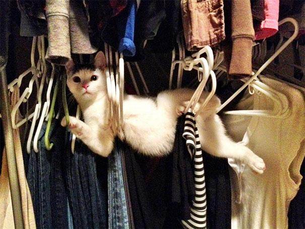 pisica_haioasa_blocata_in_umerase