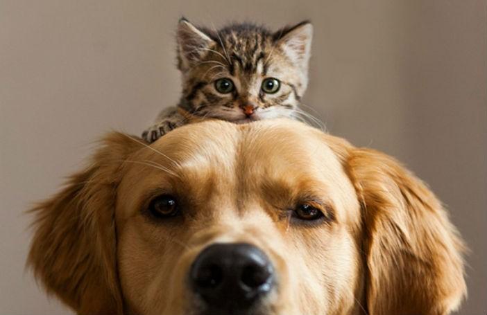 pisicile sunt mai destepte decat cainii