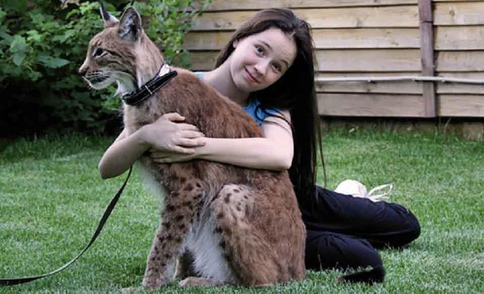 8 pisici salbatice potrivite ca animal de companie
