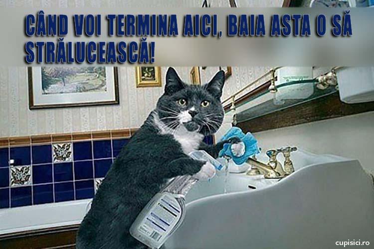 pisicutele ar face curat in casa
