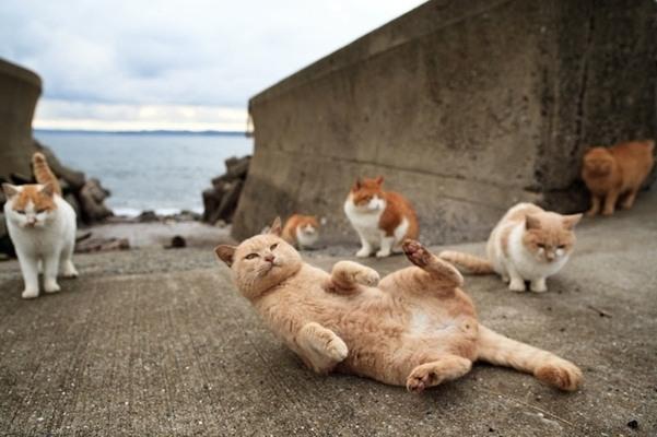 insula pisicilor