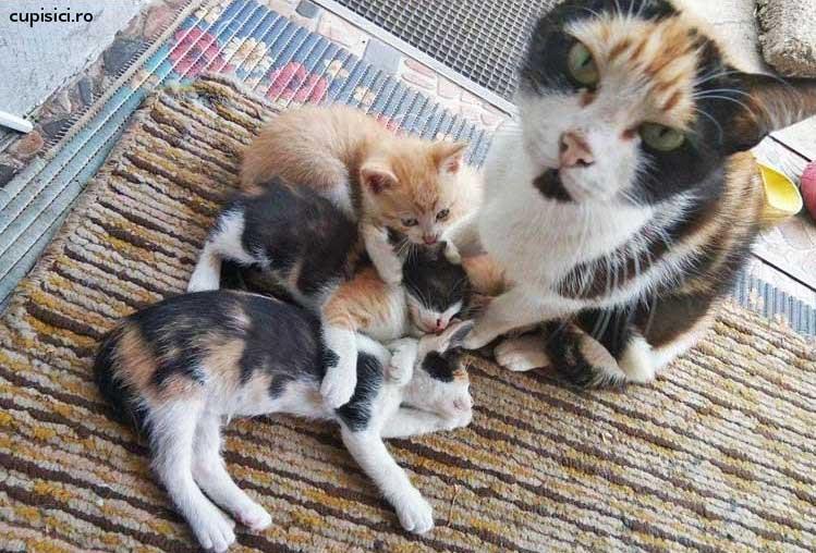 pisica mama si pisoii ei