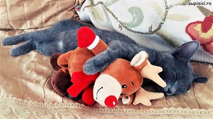 dorm pisicile atat de mult