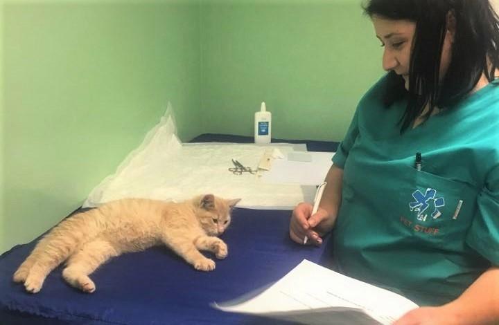 pisicile cu ochii deschisi atunci cand sunt anesteziate