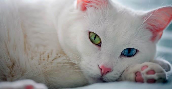 rasa de pisici ti se potriveste