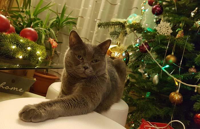 stresul cauzat de sarbatori pisicii