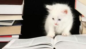 cele mai inteligente rase de pisici
