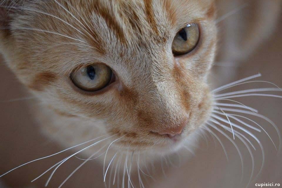 pisicile vad lucruri invizibile pentru oameni