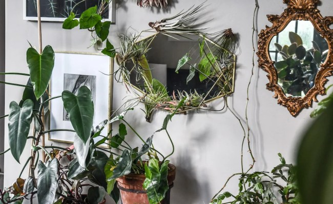 This Apartment Is A Plant Lover S Dream A Cup Of Jo
