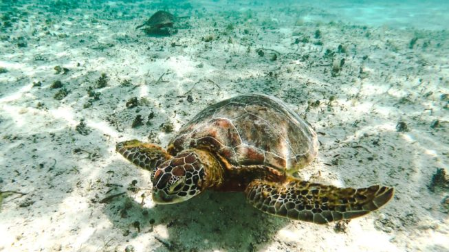 Turtles on Crab Cay Cayo Cangrejo Isla de Providencia | Colombia travel guides by Cuppa to Copa Travels