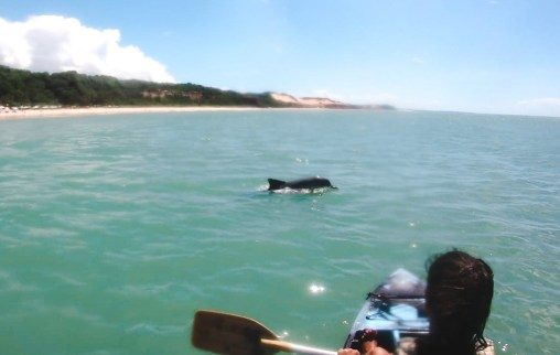 Sea kayaking with wild dolphins, Pipa Brazil | 3 months in Brazil trip travels