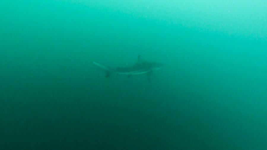 galapagos shark swimming most unforgettable experiences in latin america