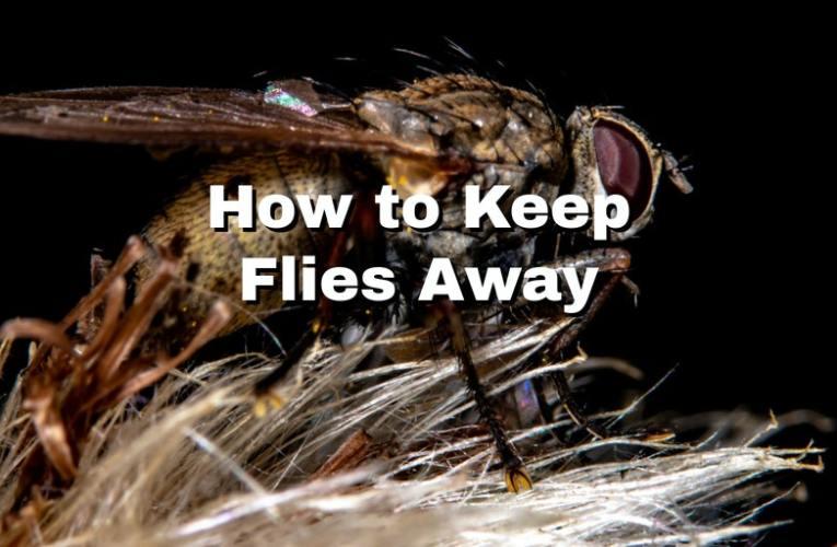 How to Keep Flies Away