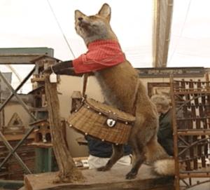 scottish fox