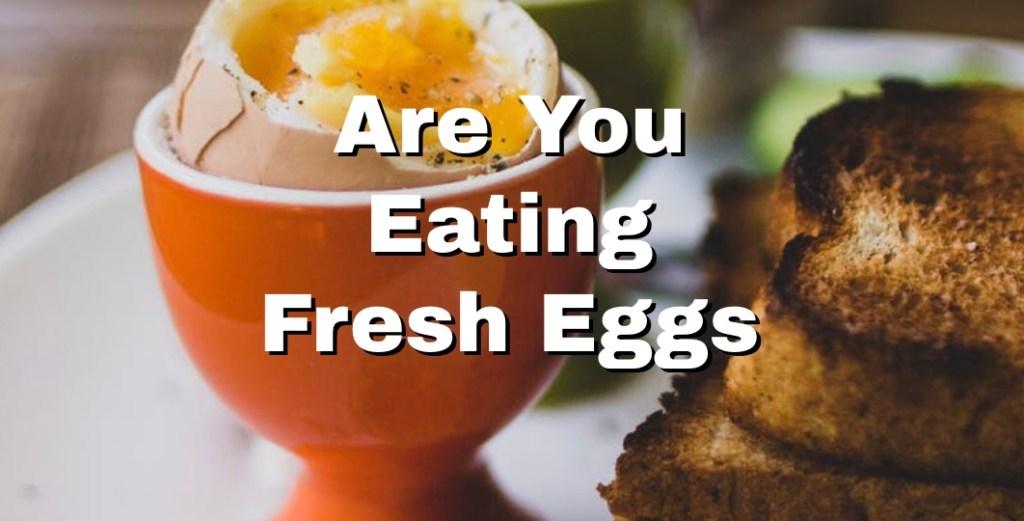 fresh eggs splash