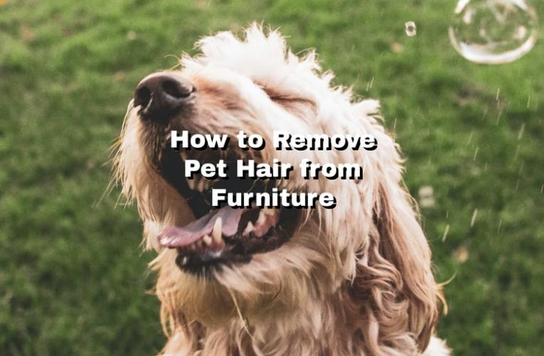 How to Remove Pet Hair from Furniture