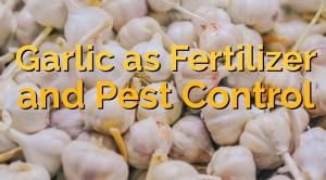 Garlic as Fertilizer and Pest Control 1