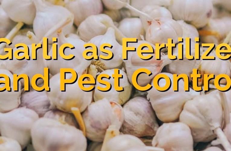 Garlic as Fertilizer and Pest Control