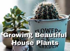 Growing Beautiful House Plants 1