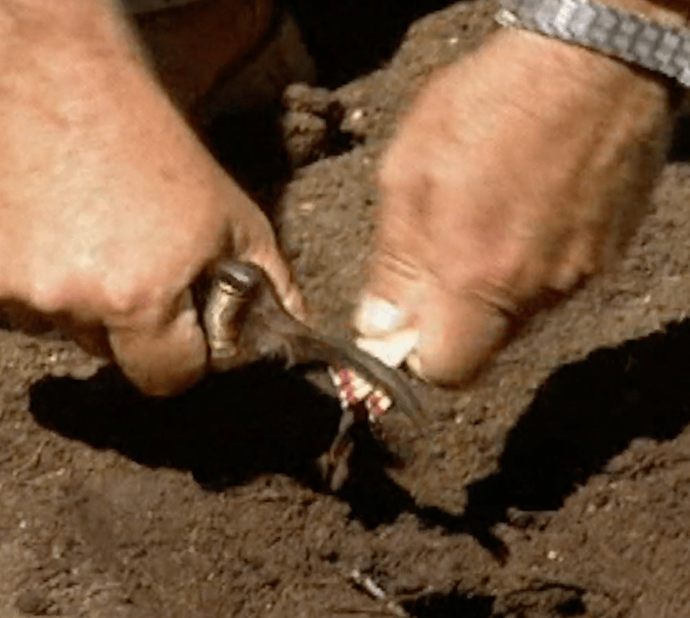 Adding Sulfur to Your Soil 1