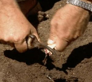 sulfur soil add