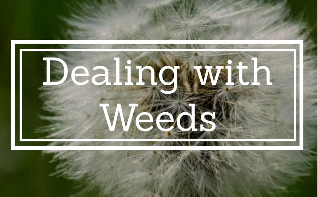 Top Ten Garden Hints - No 8 - Dealing with Weeds 1