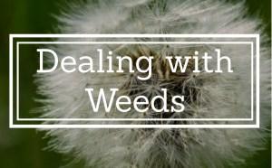 Top Ten Garden Hints - No 8 - Dealing with Weeds 2