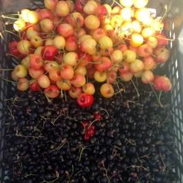 cherry-fruit