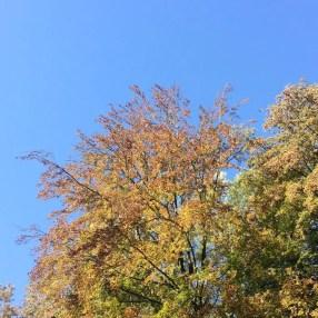 automne Pays-Bas