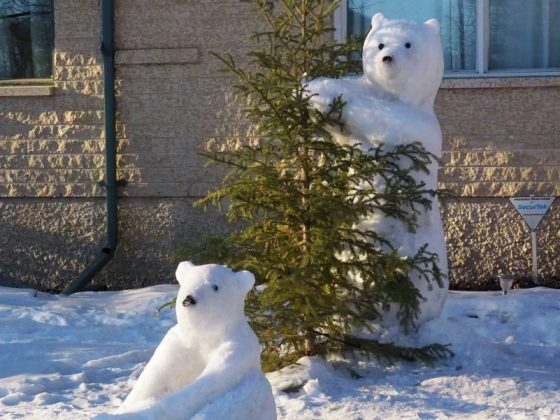 Winnipeg snow bears